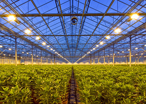 GrowFlux Intelligent LED Horticultural Lighting Maximizes Yields for CEA Facilities and Greenhouses