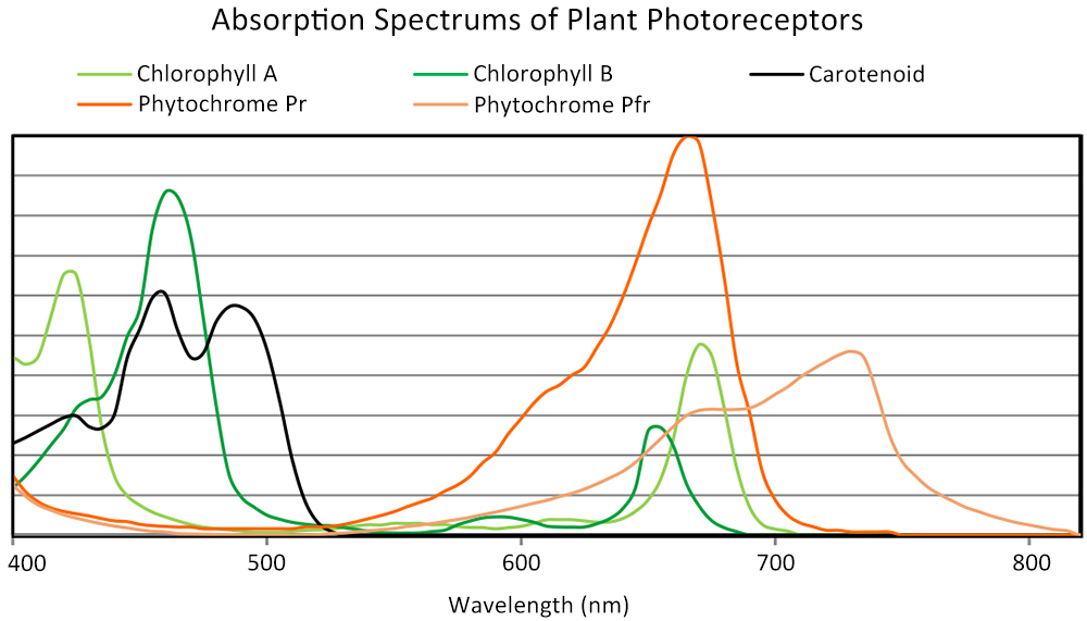 Absorption Spectrums of Plant Photoreceptors