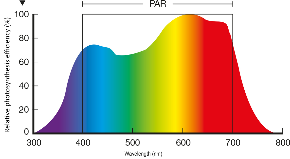 Photosynthetically Active Radiation (PAR)