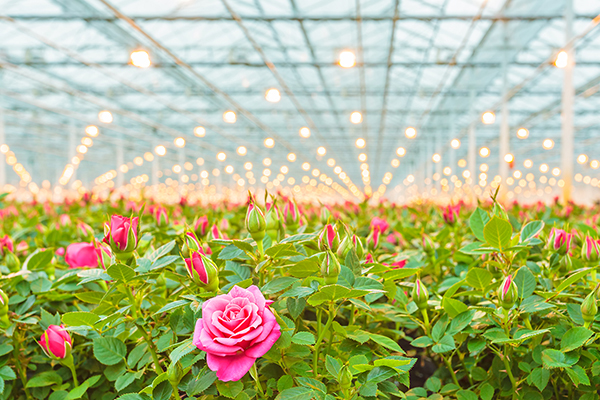 How Horticulture Lighting Works
